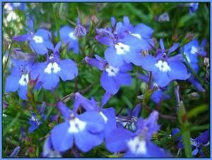 Was Sind Frühlingsblumen : blau blau blau sind alle meine blumen foto bild pflanzen pilze flechten bl ten ~ Whattoseeinmadrid.com Haus und Dekorationen