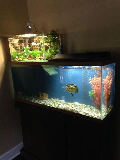 aquatic turtle basking light the 25 best ideas about turtle aquarium on pinterest