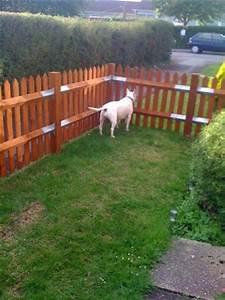 Dog fence ideas cheap modern landscape hog panel fencing for Easy dog fence ideas