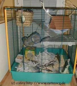 Ratten In Der Wand : ratten info gehege k fig ~ Yasmunasinghe.com Haus und Dekorationen
