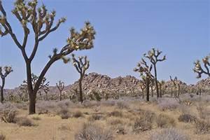 Indian Desert Plants | www.pixshark.com - Images Galleries ...