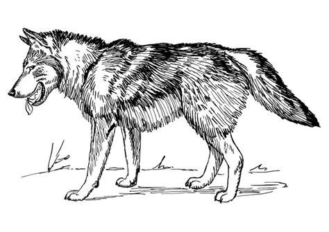En De Wolf Kleurplaat by Kleurplaat Wolf Afb 22785 Images
