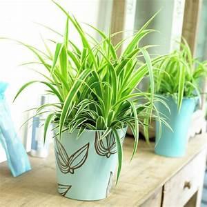 10 Schattenpflanzen Fr Die Dunkelsten Ecken Zu Hause