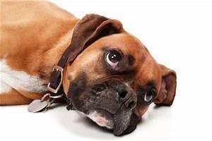 mystery canine illness