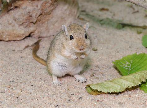 Wie Viel Kostet Eine Maus Als Haustier by Eine Maus Artgerecht Als Haustier Halten Zooroyal Magazin