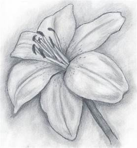 Pencil Illustration day lilly | lily.jpg | Rose's drawing ...