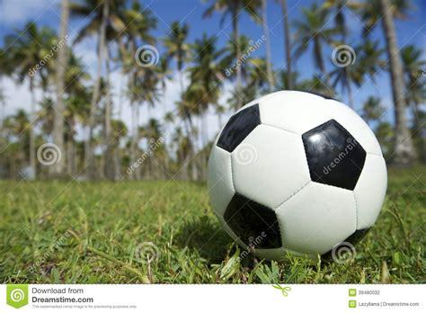 football soccer ball brazilian palm trees grass stock