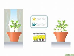 Bonsai Stecklinge Machen : aus einem normalen baum ein bonsai machen wikihow ~ Indierocktalk.com Haus und Dekorationen