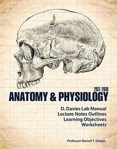 Anatomy  U0026 Physiology 2017