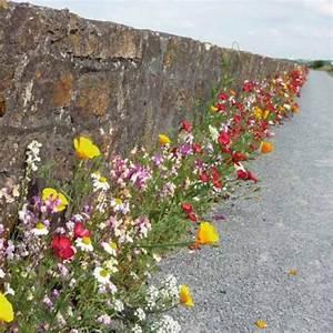 Mur De Fleurs : prairie fleurie pied de mur la bonne graine ~ Farleysfitness.com Idées de Décoration