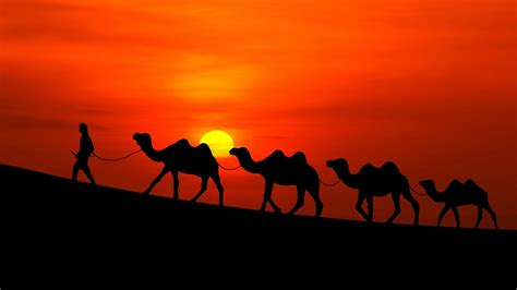 camel caravan   sunset hd wallpaper wallpaper