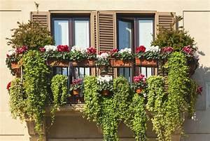 Bäume Für Den Balkon : sichtschutzpflanzen f r den balkon ~ Frokenaadalensverden.com Haus und Dekorationen