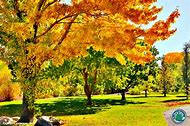 Fall Color Landscape