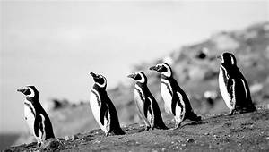 3 Tips From Experts On Making Better Black And White Photography