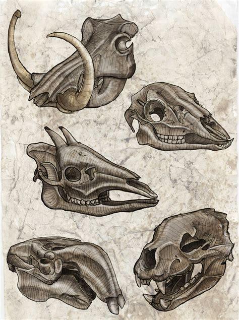 variety   interesting skulls anatomy sketch