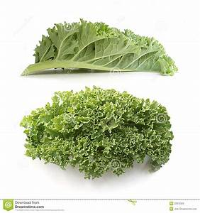 Curly kale leaves stock image. Image of healthy, tasty ...