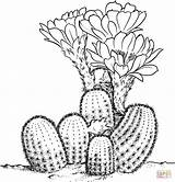 Desert Drawing Coloring Plants Pages Sheets Getdrawings sketch template