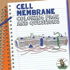 Cell Membrane Coloring Activity Help Students Identify Key Structures