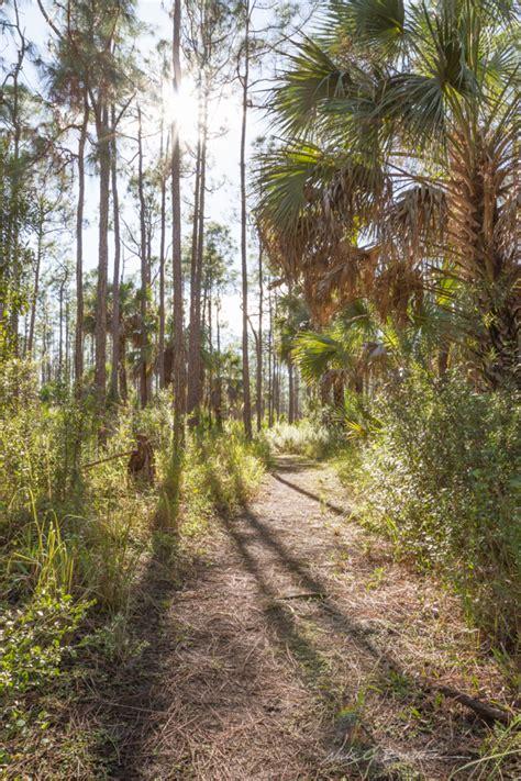 collier seminole state park 3 5mi trail nick botner