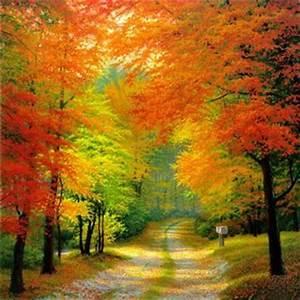 Bilder Herbst Kostenlos : herbst gb pics herbst g stebuch bilder jappy bilder facebook ~ Somuchworld.com Haus und Dekorationen