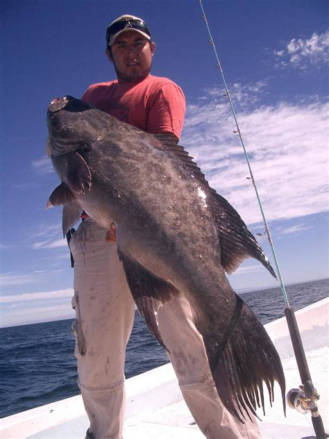 fishing groupers