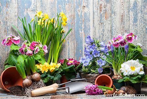 Types Of Flowers To Grow In Summer Garden