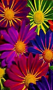 Colorful Flowers Wallpapers | Wallpapers Gallery