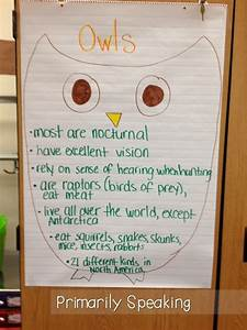 Whoooo Loves Owls Primarily Speaking