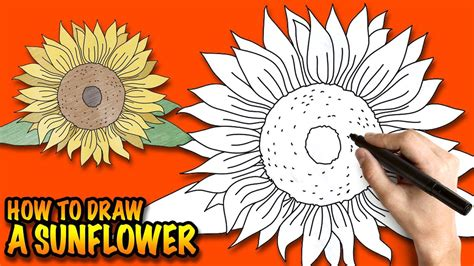 draw  sunflower easy step  step drawing