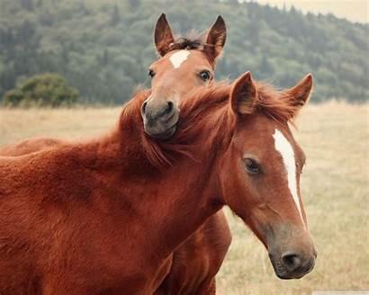 Horse Wallpapers Standard Wallpapertag