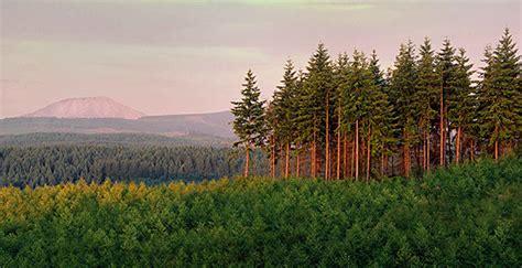lumber engineered wood wood products economy lumber