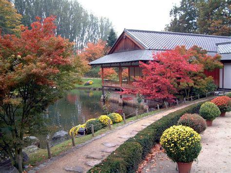 Le Jardin Japonais De Hasselt  Chrysanthèmes 2