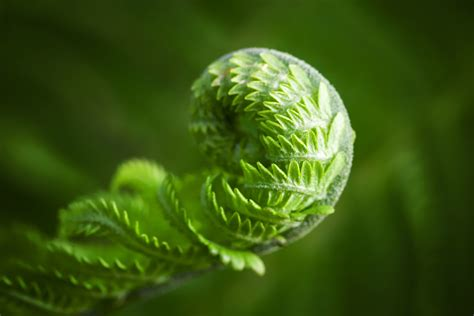 fern macro wallpapers high quality