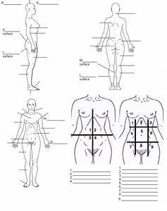 Body Regions And Terms To Know