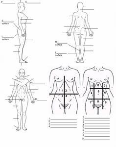 Foot Region Anatomy Diagram