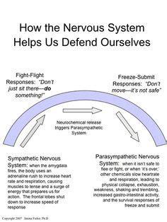 fight  flight response