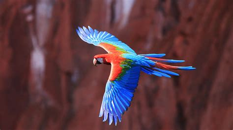 Macaws Birds Parrot Wallpapers Hd Desktop And Mobile
