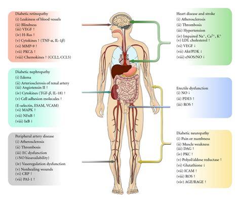 average blood glucose level   meal
