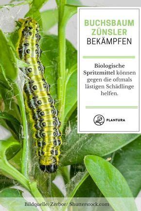 Der Chemische Garten by Buchsbaumz 252 Nsler Bek 228 Mpfen Nat 252 Rliche Hausmittel Und