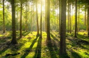 1000 Wald Fotos · Pexels · Kostenlose Stock Fotos