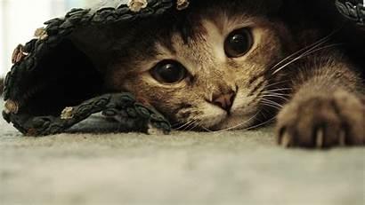 Funny Wallpapers 1080p Animal Cat Background Wallpapersafari