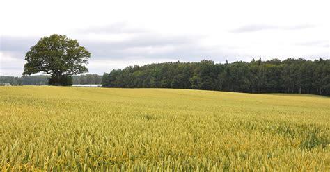Mana Latvija, mani lauki, mana kopiena