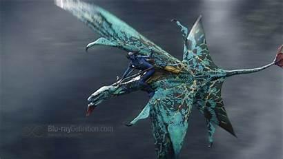 Avatar Dragon Bird Dragons Creatures Spot Blu