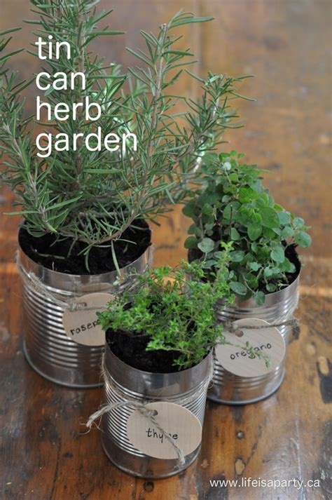 putting the garden to bed and a tin can herb garden is a