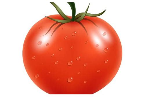 tomato vector free download