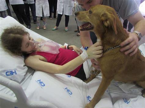 Mujer Pegada Con Un Perro | mujer se queda pegada con un ...
