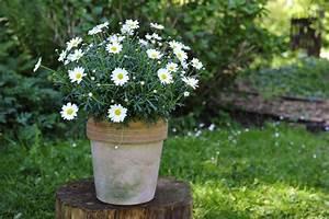 Blumen Für Schatten : sch ne pflanzen f r sonne halbschatten und schatten ~ Lizthompson.info Haus und Dekorationen