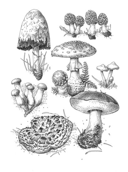 Marjorie Leggitt | American Society of Botanical Artists