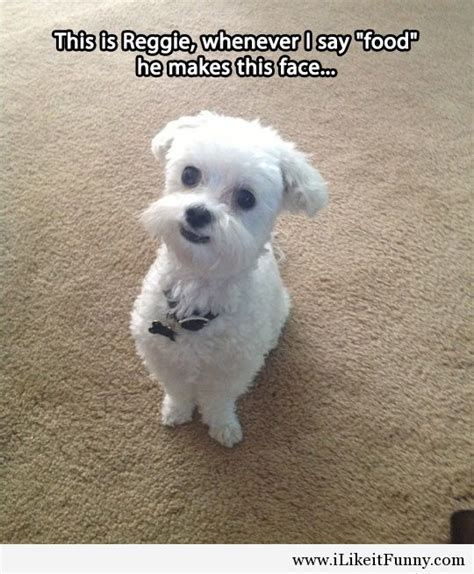 quotes sayings puppy cute quotesgram