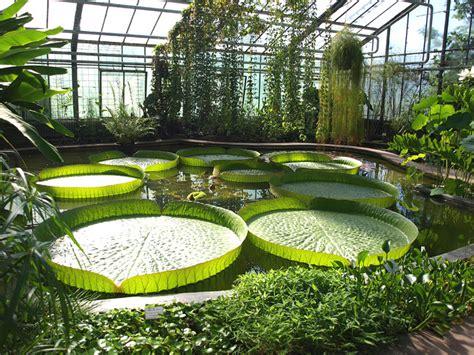 Botanischer Garten Berlin Seerose by Kit Botanischer Garten Pflanzen Portraits Lateinische